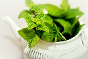 【ペパーミント】<br />原料植物、ハーブティーや精油に期待される効果とは