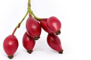 【ローズヒップ】<br />原料植物、ハーブティーやオイルに期待される効果効能