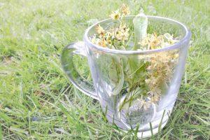 【リンデン・フラワー】<br />原料植物、ハーブティーに期待される効果効能