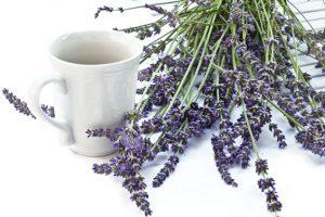 【ラベンダー】<br />原料植物、ハーブティーや精油に期待される効果効能