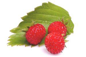 【ワイルドストロベリー】<br />原料植物、ハーブティーに期待される効果効能