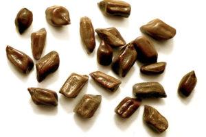 ハブ茶(エビスグサ/決明子)<br />健康茶と期待される効果効能紹介