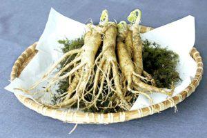 【オリエンタルジンセング/高麗人参】<br />原料植物、健康茶に期待される効果効能